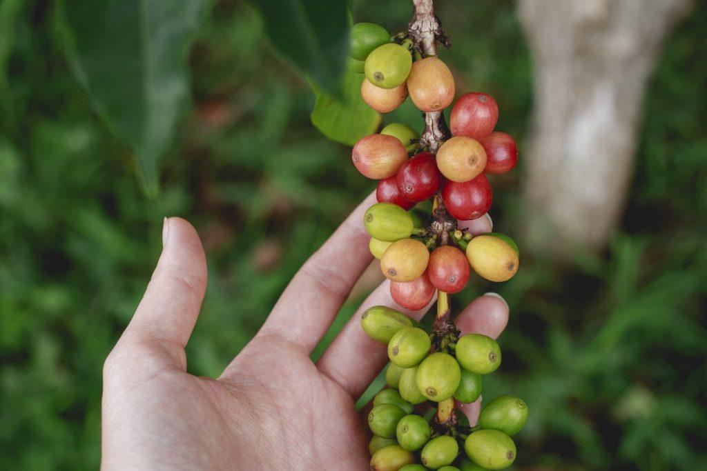 waarheid-over-Koffie-koffiekers