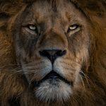 7-eigenschappen-van-effectief-leiderschap